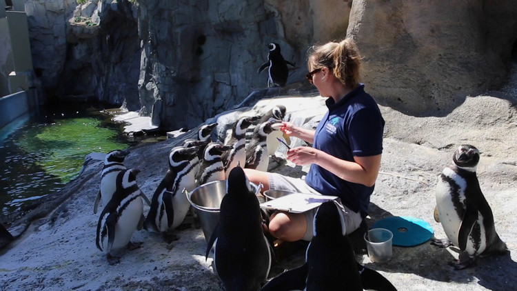 Behind the scenes at Long Beach's Aquarium of the Pacific during COVID-19 — ABC7 Los Angeles