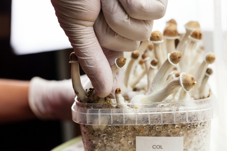 """US Government Commits To Psychedelic Psilocybin As """"Breakthrough Treatment"""" For Severe Depression"""