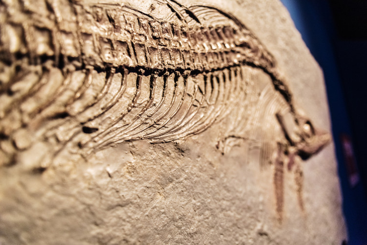 God-Fearing Family Hid Impressive Ichthyosaurus Fossil For Over A Century