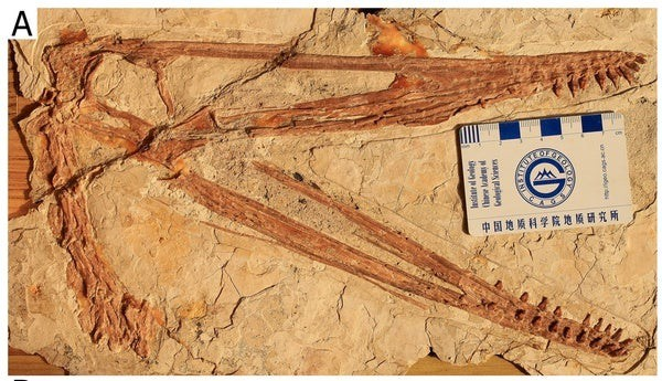 New Pterosaur Was Fossilized with a Ridiculous Grin