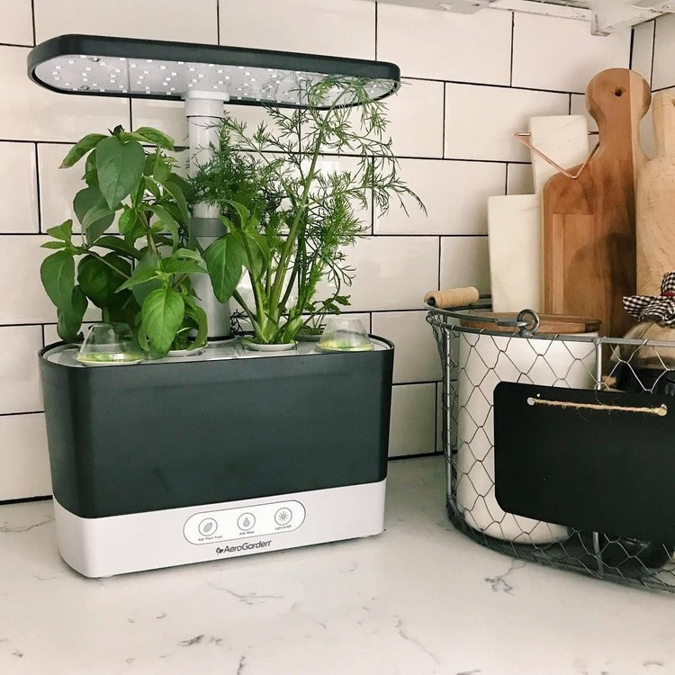 This Self-Watering Indoor Garden Is a Game Changer for Anyone Who Kills Plants — Hunker