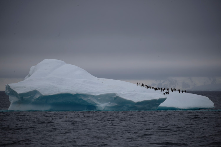 On board the Antarctic expedition that reveals dramatic penguin decline — Reuters
