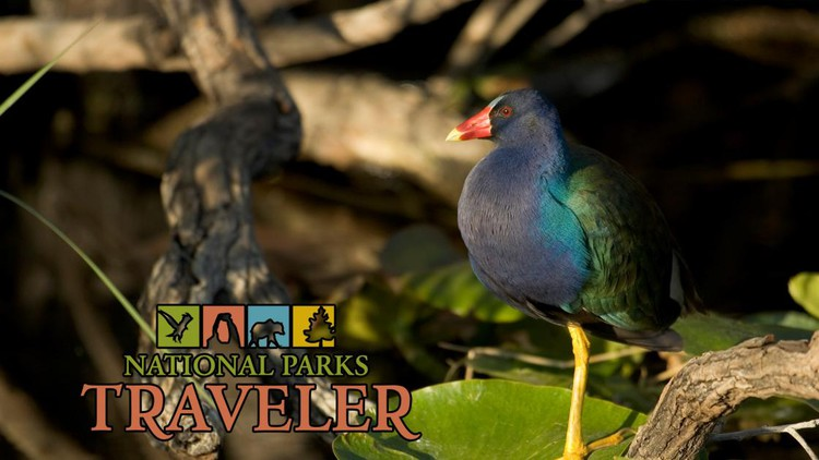 National Parks Traveler Podcast Episode 13: Wildlife in the Parks — National Parks Traveler