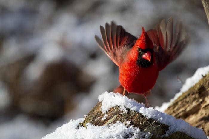 Birding In The National Parks During The Year Of The Bird